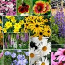 200 MIXED WILDFLOWER SEEDS