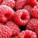 20 RED RASPBERRY SEEDS
