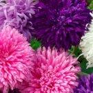 GIANT CALIFORNIA ASTER FLOWER SEEDS