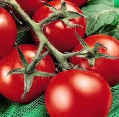 25 FRESH HEIRLOOM MONEYMAKER TOMATO SEEDS