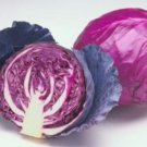 25 FRESH CABBAGE RED ACRE SEEDS