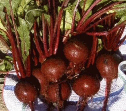 25 FRESH HEIRLOOM DETROIT DARK RED BEET SEEDS