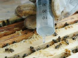 300g Oxalic acid crystals, high purity >99.5% - Varroa, Beekeeping, Beehive - 300g