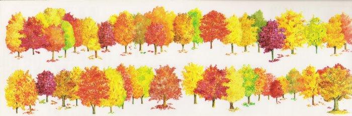 Colourful Forrest Stikcers