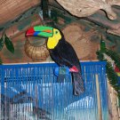 Handmade custom painted multi-layered life size Toucan