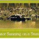 Louisiana Postcard Gator Sunning On A Stump Alligator