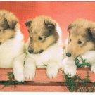 VINTAGE RPPC Puppies Pals Dogs Postcard