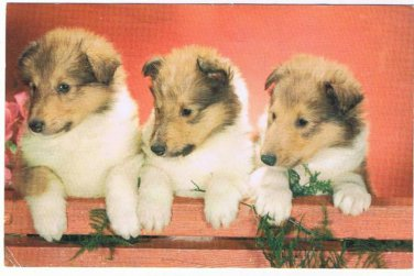 VINTAGE RPPC Puppies Pals Dogs Postcard