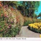 Orlando Florida Postcard Sweet Pea Hedge Lake Eola Park Snapdragons Pansies