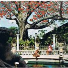 Clearwater Florida Postcard The Kapok Tree Blooms In February