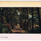 VINTAGE Imprinted Older Canadian In The Woods Postcard