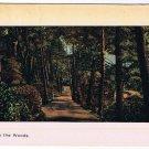 VINTAGE Imprinted Older Canadian In The Woods Postcard