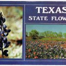 Texas Postcard State Flower Bluebonnets Mixed With Indian Blankets