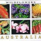 Australia Postcard Wildflowers Bottlebrush Coral Gum Orchid Fuchsia Grevillea