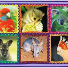 Australia Postcard Native Species Pygmy Possum Koala Cockatoo Wallaby Rosella