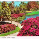 Florida Postcard Blossom Time At Cypress Gardens