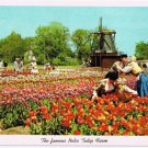 Holland Michigan Postcard Nelis Tulip Farm Kissing Couple Curteich 1955 5C-K2517