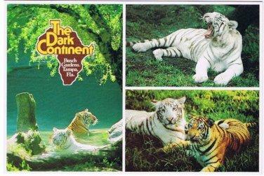 Tampa Florida Postcard White Tiger Busch Gardens Claw Island Dark Continent