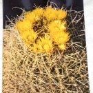 VINTAGE HS Crocker Postcard Barrel Cactus Blossoms HSC-18