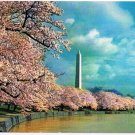 Washington DC Postcard Washington Monument Cherry Blossoms