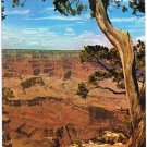 Arizona Postcard Grand Canyon Trees