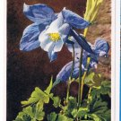 Flowers Postcard Alpine Columbine Switzerland
