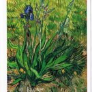 Art Postcard Van Gogh Iris 1888-1889 Dutch