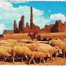 Monument Valley Arizona Postcard Flock Sheep On The Dunes