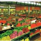 Aalsmeer Holland Postcard World Flower Centre Cutflower Section