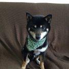 Dog KARAKUSA Bandana Collar Green M size (Dog Collar + Bandana)