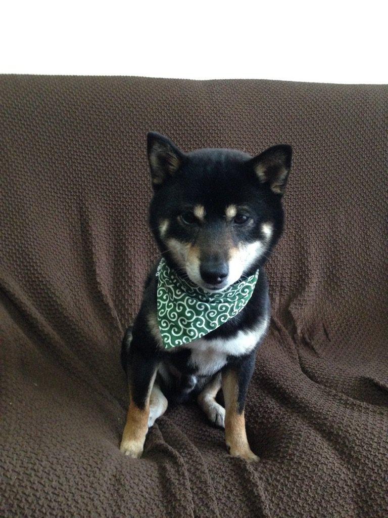 Dog KARAKUSA Bandana Collar GREEN SS size