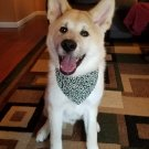 Dog KARAKUSA Bandana Collar GREEN L size (Dog Collar + Bandana)
