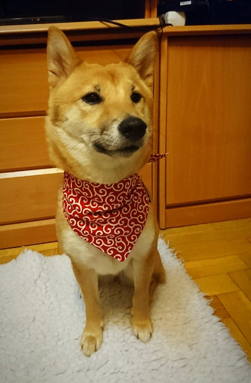 "Dog Bandana for Japanese KARAKUSA ""Small-patterned Red"""