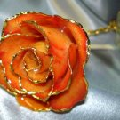 APRICOT coloured real ROSE - Lacquered & 24k gold-plated