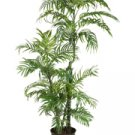 Kentia Palm Silk Tree