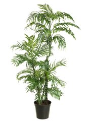 Kentia Palm Silk Tree