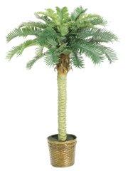 Phoenix Silk Palm Tree