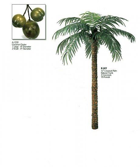 Coconut Palm (12 feets tall)