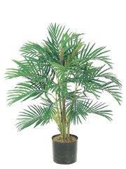 Areca Palm (3 feets tall)