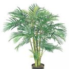 Areca Palm Tree (4 feets tall)