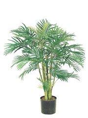 Areca Palm Tree (4 feets tall)