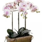 Silk Phalaenopsis Orchid (Pink)