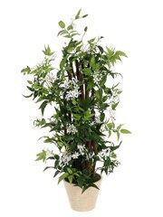 Jasmine Flower Bush