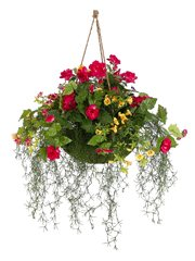 Victoria Garden Hanging Basket Mixed