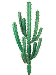 Hairbrush Artificial Cactus