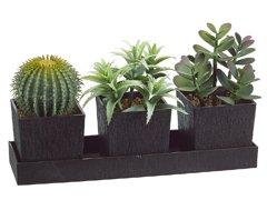 3 Styles Cactus Mixed