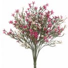 Starflower Bush