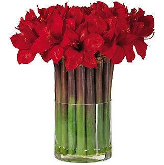 Amaryllis w/Cylinder Vase
