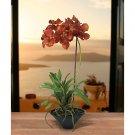 Vanda w/Black Ceramic Vase