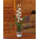 Cymbidium w/White Wash Pot (White)